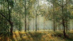 groene oplossing voor bosbouw